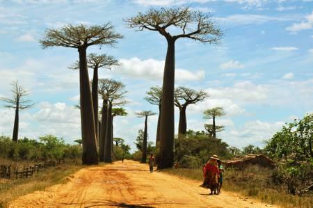 Femmes dans l'allée des baobabs