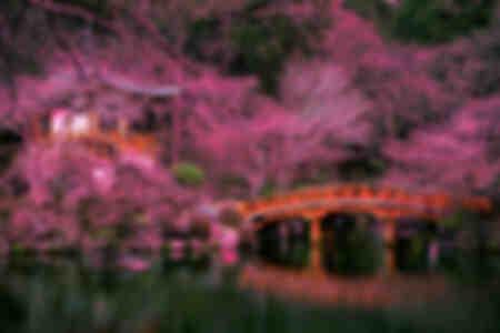 Templo Daigo-Ji Kioto