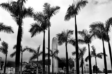 Tropical HKG