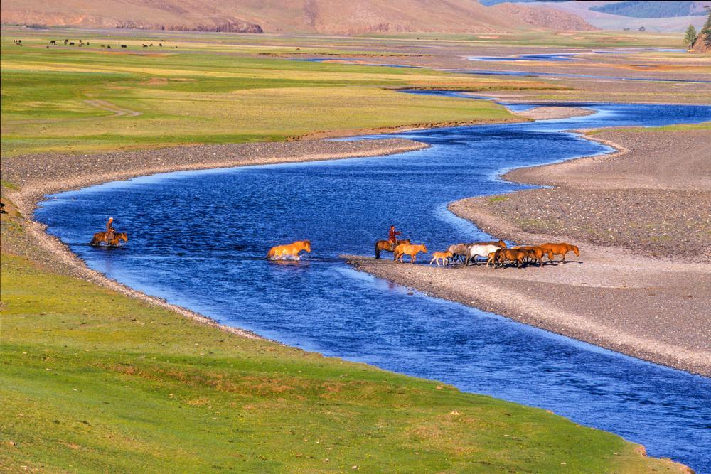Traversee De Chevaux  En Mongolie
