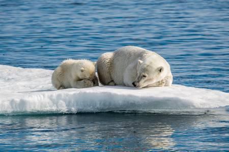 La maman ours et son petit