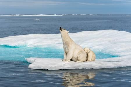 Le cri du désespoir Arctique