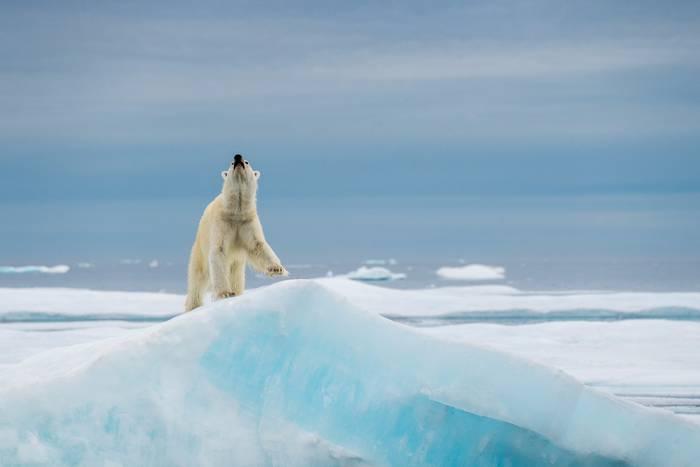 Le Roi De L Arctique