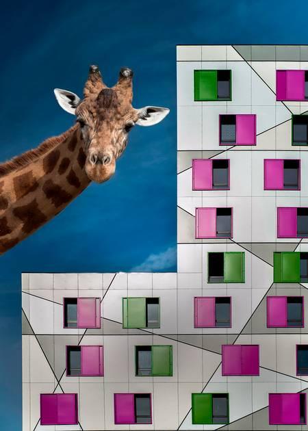 girafe street 2