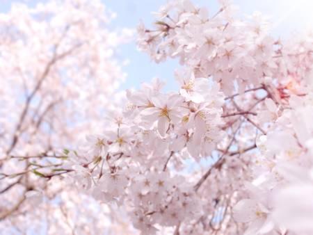Spring Feeling