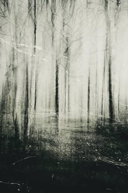 A floresta dos sonhos