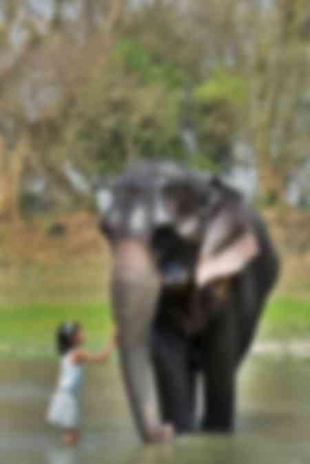 Bath of an elephant