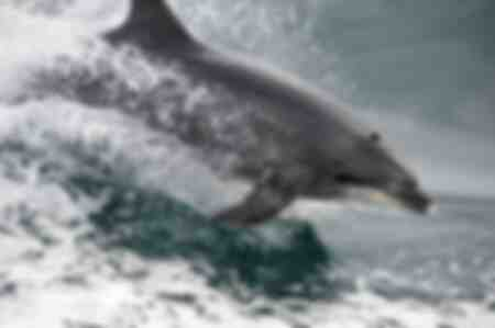 Dolphin in the Molène Archipelago
