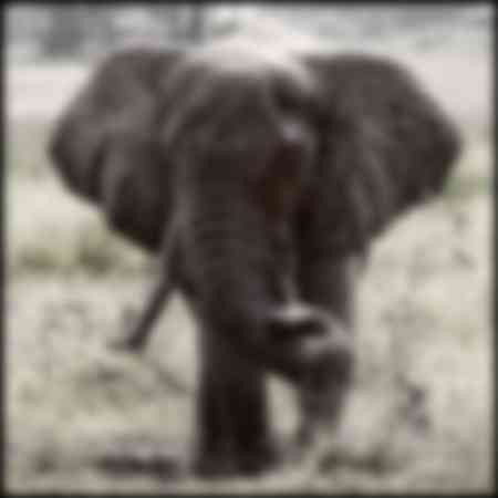 Elephants of Okavongo Delta
