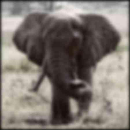 Eléphants du delta de l'Okavongo