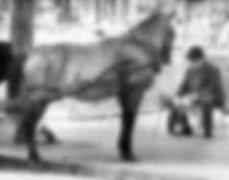 Uomo seduto di fronte a un cavallo