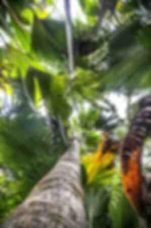 La lumière du soleil à travers feuilles tropicales