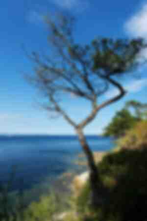 Il sentiero costiero
