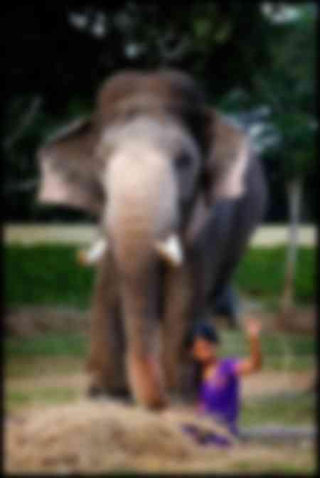 Préparation des éléphants pour le Jumbo Savari