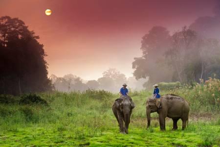 Balade à dos d'éléphant 2