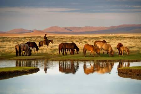 Junger Reiter sammelt die Herden