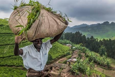 Gli abitanti dei villaggi vicino ai campi da tè