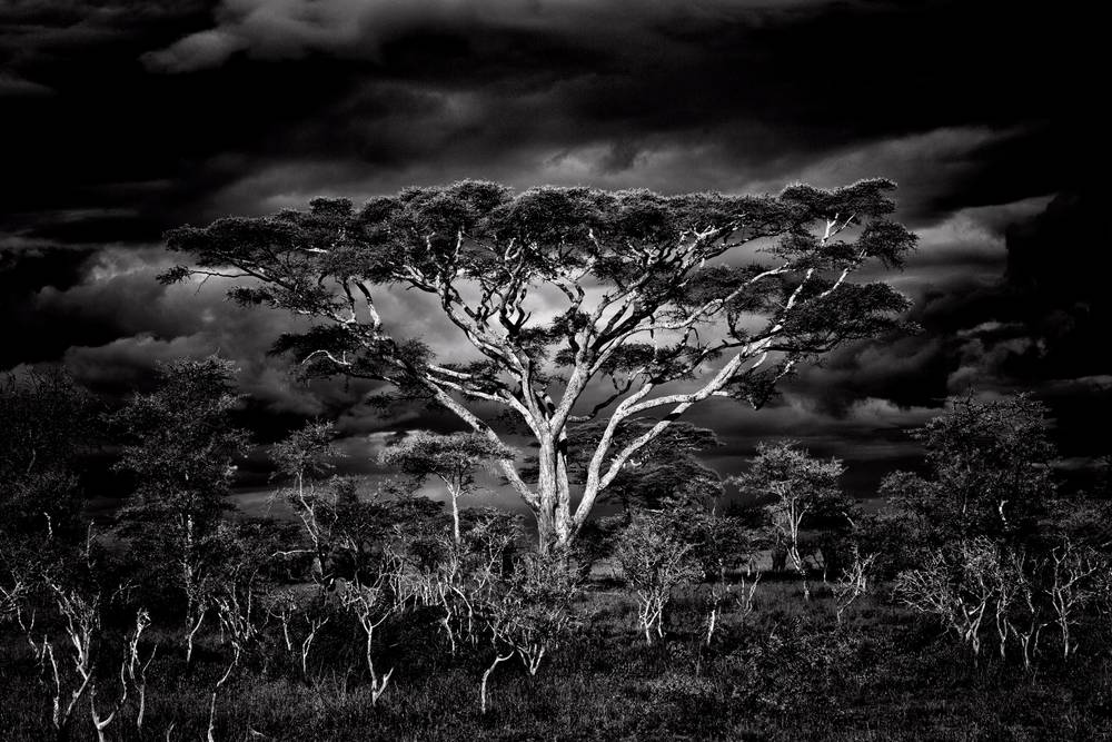 Photo tanzanie achat vente photos d 39 art artphotolimited for Agence format paysage