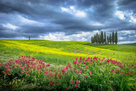 Bouquet of flowers and cypresses under a stormy sky