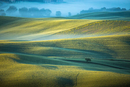 morning mist in Tuscany 2