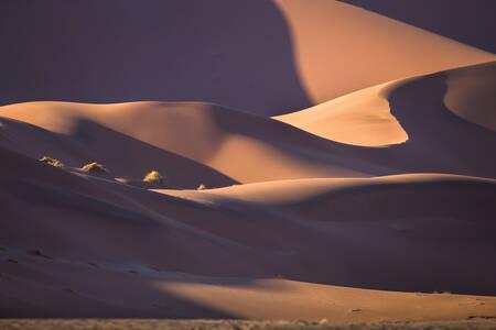 Dünen in der Namib-Wüste