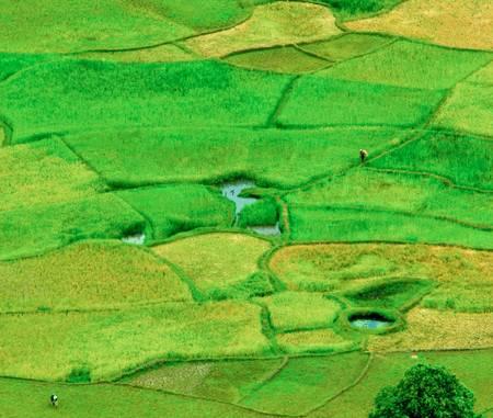 Rizières à Madagascar