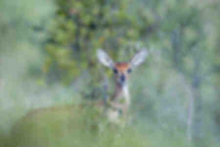 Charmante antilope op een zachte achtergrond