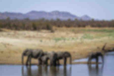 Grupp av elefanter som dricker i en sjö