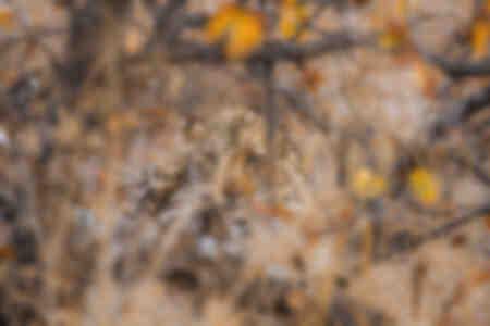 Leopard im Herbstlaub versteckt
