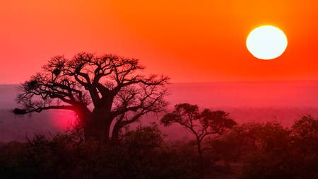 Baobab au couché de soleil