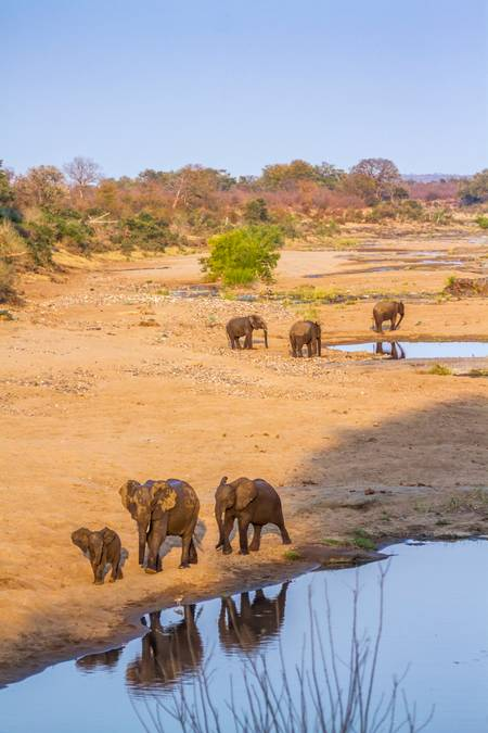 River landscape with elephants