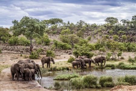 Afrikanische Savanne mit Elefantenherde