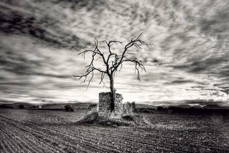 THE TREE AND THE RUIN