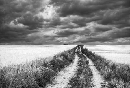 El camino del trigo