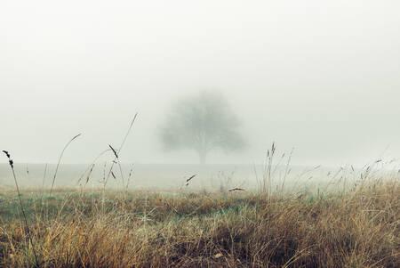 Mirage d'hiver