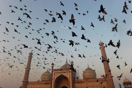 le colombe sorvolano la moschea Jama Masjid
