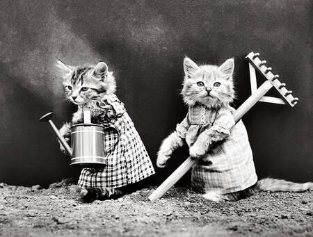 Gardening Cats
