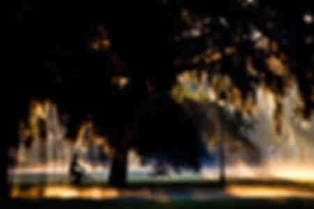 Fog Forsyth Park Savannah