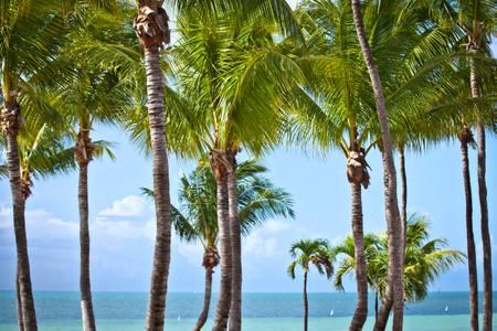 Paradise Key West