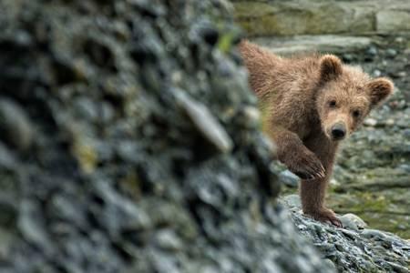 Peak A Boo Bear