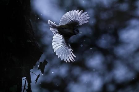 Deux ailes et un éclair