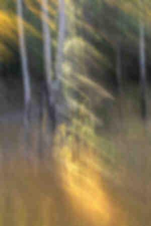 Spirito della foresta 1