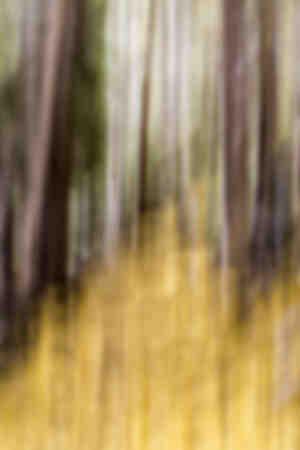 Sentiero della foresta d'oro