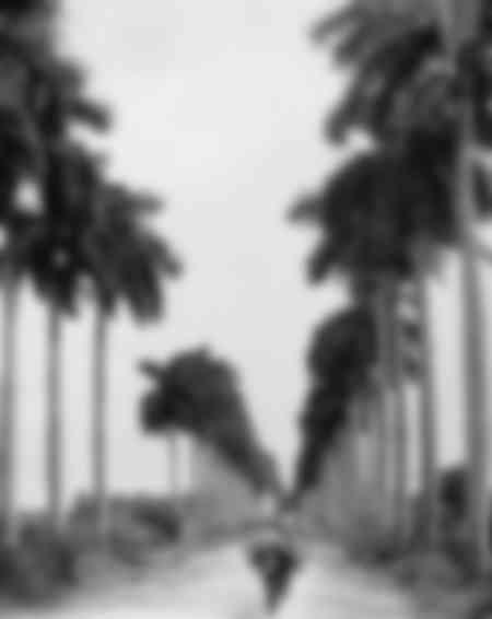 Avenue des Palmiers