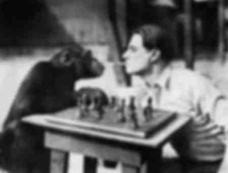 Chimpanzee and a Young Man Playing Chess