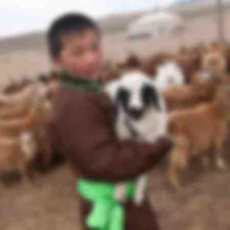 Kaschmir-Ziegen