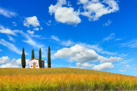 Tuscan view Cypresses
