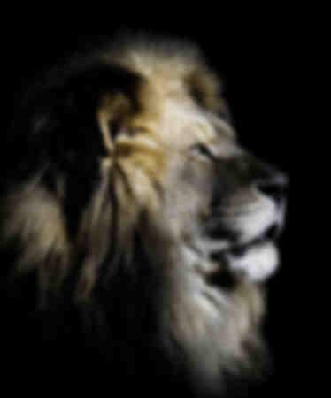 Profil du Roi