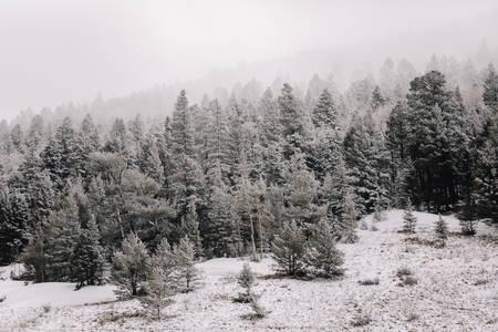 Dernières neiges 11h46