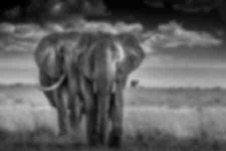 twee olifanten tegenover Amboselli